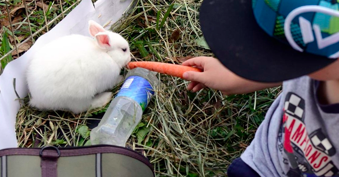 Bunnies AND compostable water bottles!